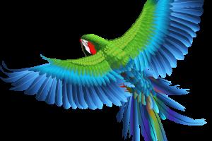 30-305258_transparent-parrot-clipart-picture-birds-png-transparent-background (1)